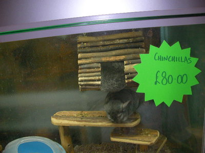 creature company, pet shop, chinchillas