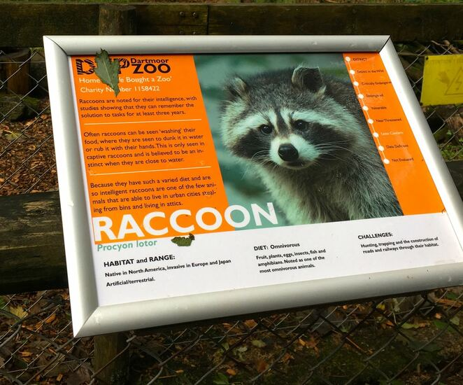 information sign,dartmoor zoo,racoon