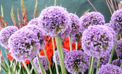 Malvern Autumn Show, Three Counties Showground, Gardening, Giant Vegetables
