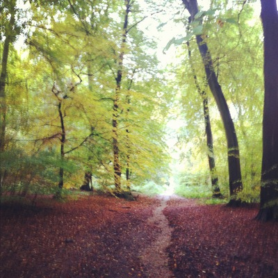 forrest, the forrest, countryside, woods, the woods, autumn woods, autumn