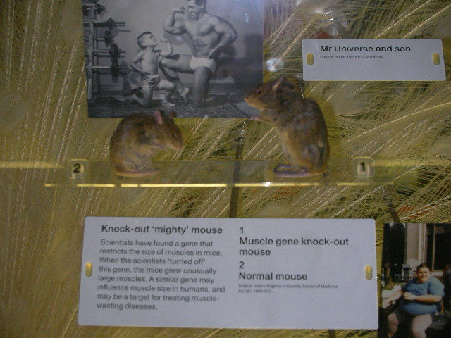science museum, mice, who am I?