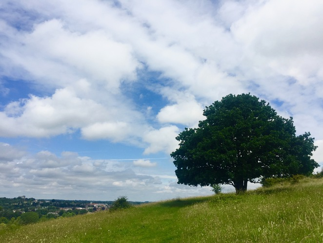 St Catherines, Hill, Winchester, Hampshire, Hike, Walk, Nature