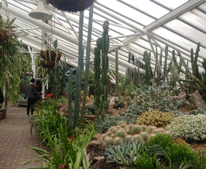 Barbican Conservatory, arid house