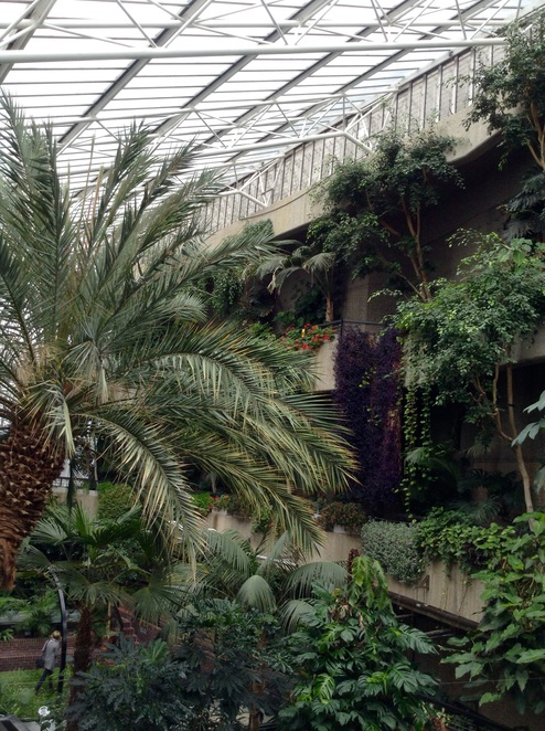 Barbican Conservatory, date palm