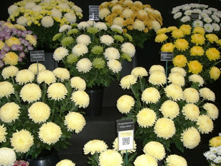 Malvern Autumn Show, Three Counties Showground