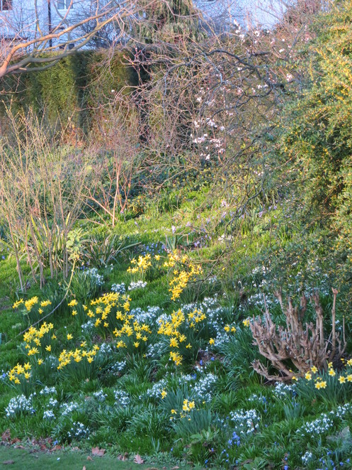 merton, college, oxford, flowers, spring