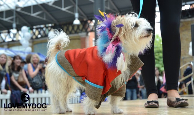 love my dog, paw pageant, spitafields market, battersea dogs home