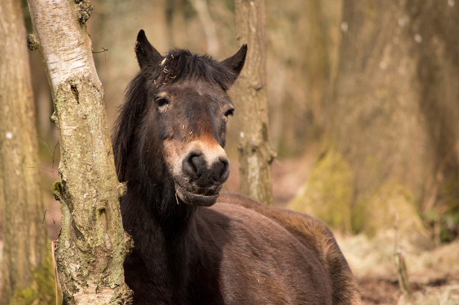 snelsmore, summer activities, days out in Berkshire, wildlife, country park, family picnic, West Berkshire, pony