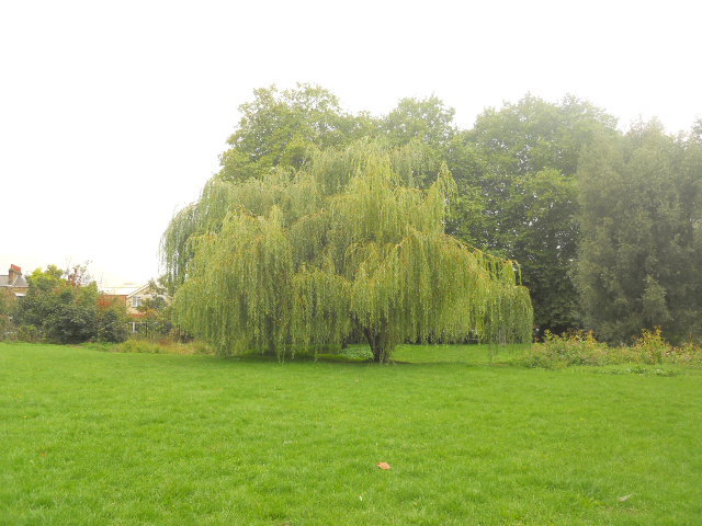 wandle park, willow tree