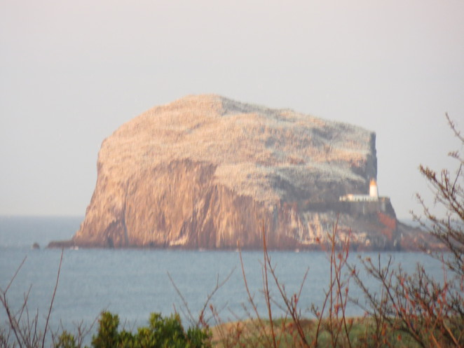 bass rock, firth of forth, north berwick, sulla, gannet