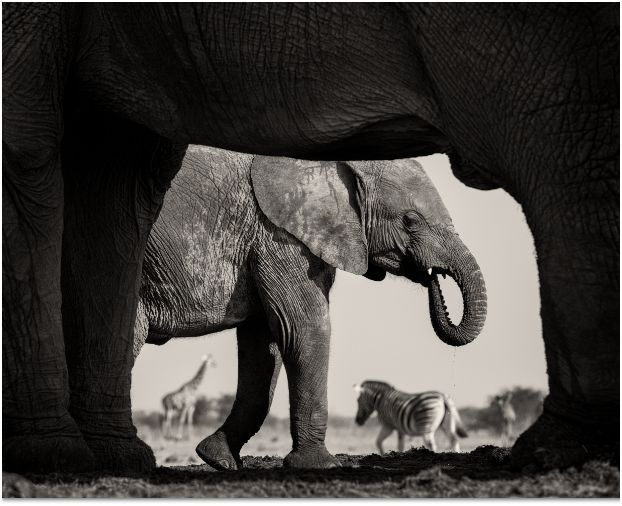 Wildlife Photographer of the Year, Wolverhampton Art Gallery