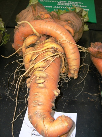 Malvern Autumn Show, Giant vegetables, Three Counties Showground