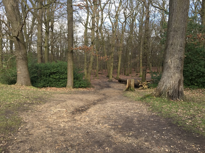 Park, Outdoor Space, Forest