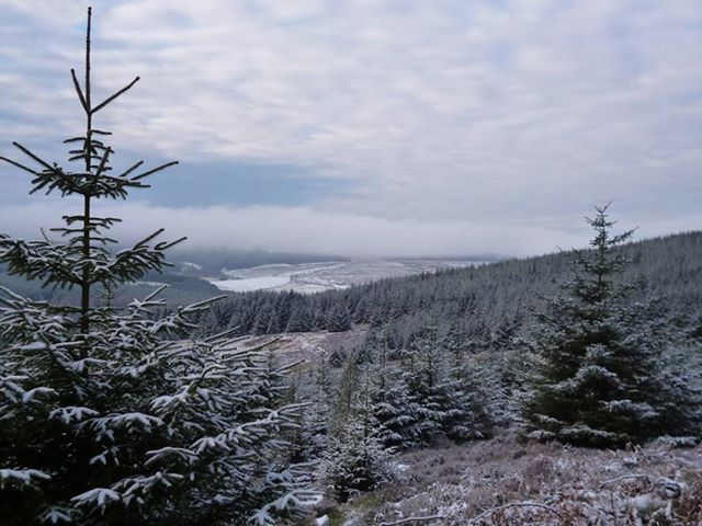 View of Kielder Water and Forest