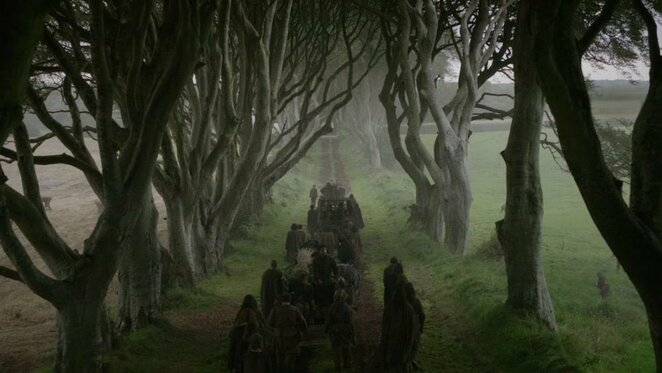A Canberrans' Guide to the Dark Hedges