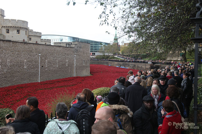 Tower Poppies Crowds