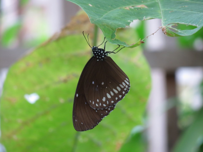 butterfly world, studley grange, wiltshire