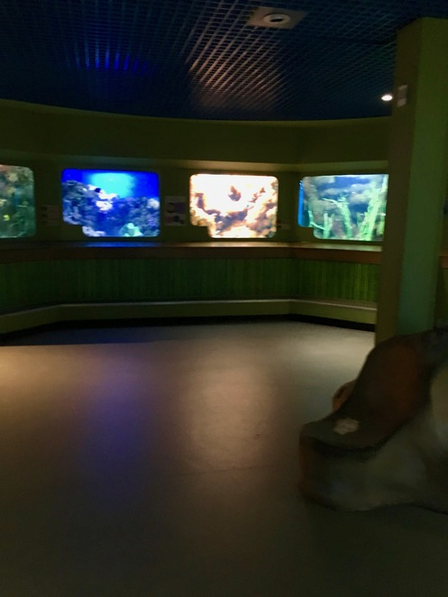 fish tanks,biozone,aquarium,fish,exhibits,marine