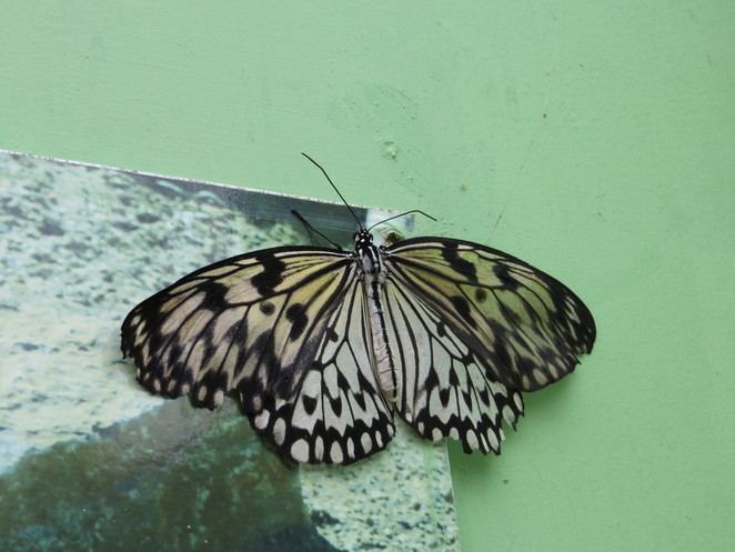 paper kite, butterfly world, studley grange, wiltshire, swindon