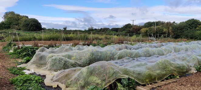 Veg beds, netting, no-nails, supports