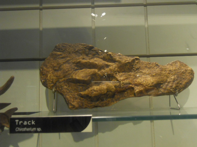 natural history museum, fossil