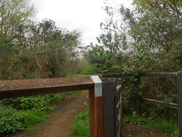 wandle meadow nature park, nature reserve
