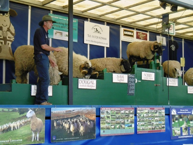 Royal Three Counties Show, Sheep Show