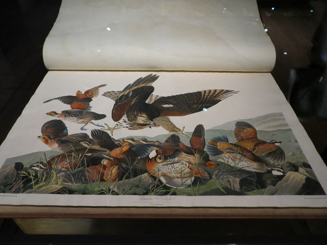 audubon, birds of america, bodleian library, oxford, marks of genius