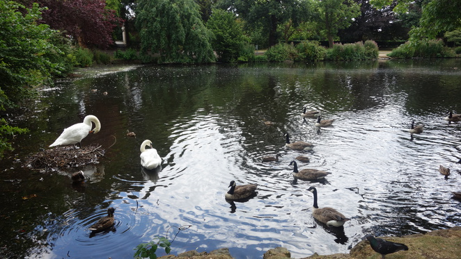 Broomfield Park, Park, Lake, Walk,