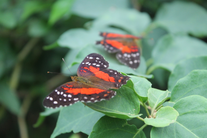 butterfly farm stratford upon avon shakespeare coventry