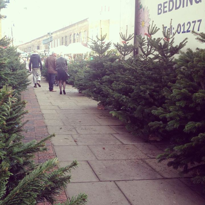 Columbia Christmas Tree: Christmas Wednesdays At Columbia Road Market
