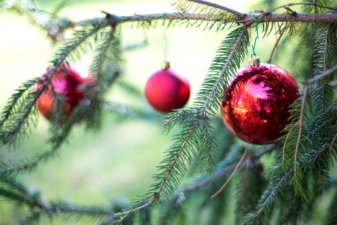 christmas trees, real christmas trees, southampton christmas trees, hampshire christmas trees