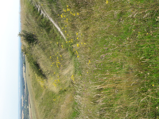 Beacon Hill iron age hillfort