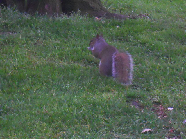 grove park, squirrel