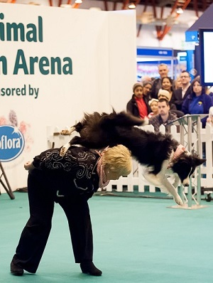 london pet show, dog dancing, mary ray