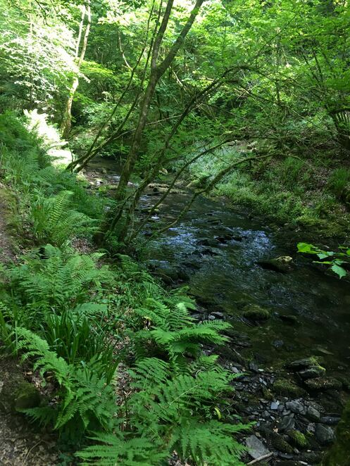 River lyd,waterfalls,devils cauldron,national trust,lydford gorge