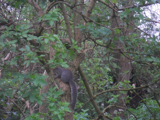 wandle meadow nature park, nature reserve, squirrel