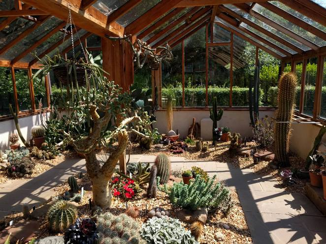 Winterbourne, Cacti, Cactus, Hothouse, Nature, Plants, Winterbourne House and Gardens, Edgbaston, University of Birmingham, Gardens, Botanical Gardens,
