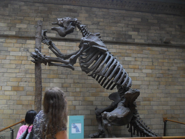 natural history museum, giant sloth