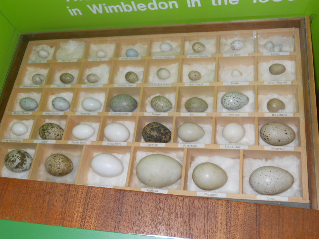 Wimbledon society museum, bird eggs, wimbledon common