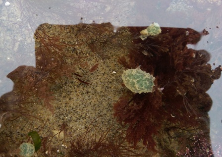 rock pool isle of wight beaches wildlife nature