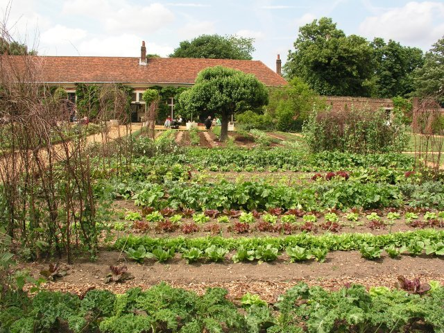 Ham House, Vegetables, Kitchen Garden