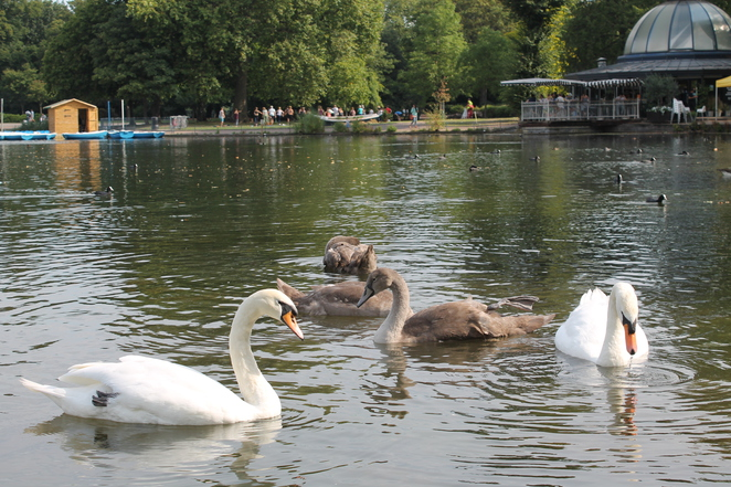 lake pavilion cafe swans water breakfast brunch lunch london mile end