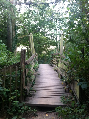 the woods bridge