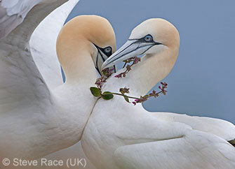 true love, steve race, wildlife photographer of the year, natural history museum