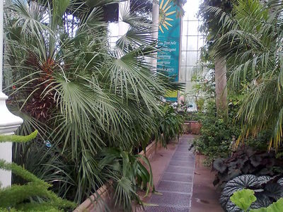 Palm house, botanics, edinburgh