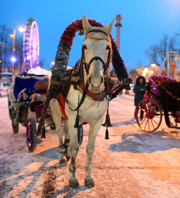 horse, carriage, ride, fair, christmas, winter, victoria park