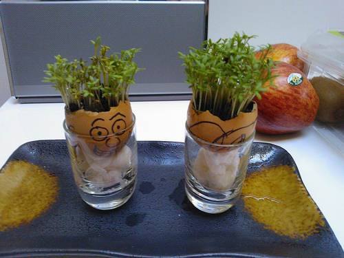 cress egg heads kids gardening