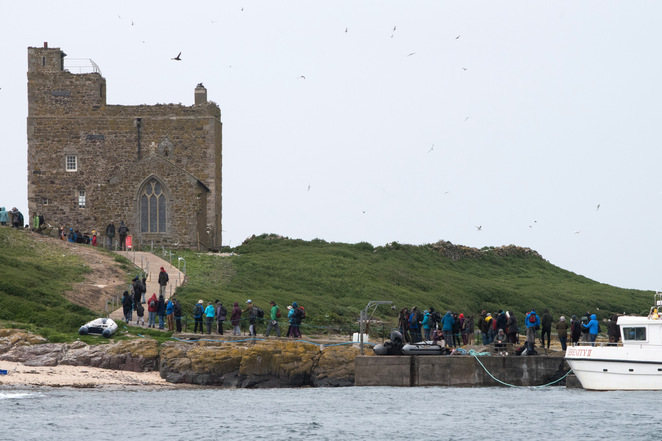 Farne Islands, puffins in England, things to do in Northumberland, boat trip Farne Islands