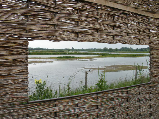 Middleton Lakes, RSPB, nature reserve, Tamworth, Jubilee wetlands, lapwings